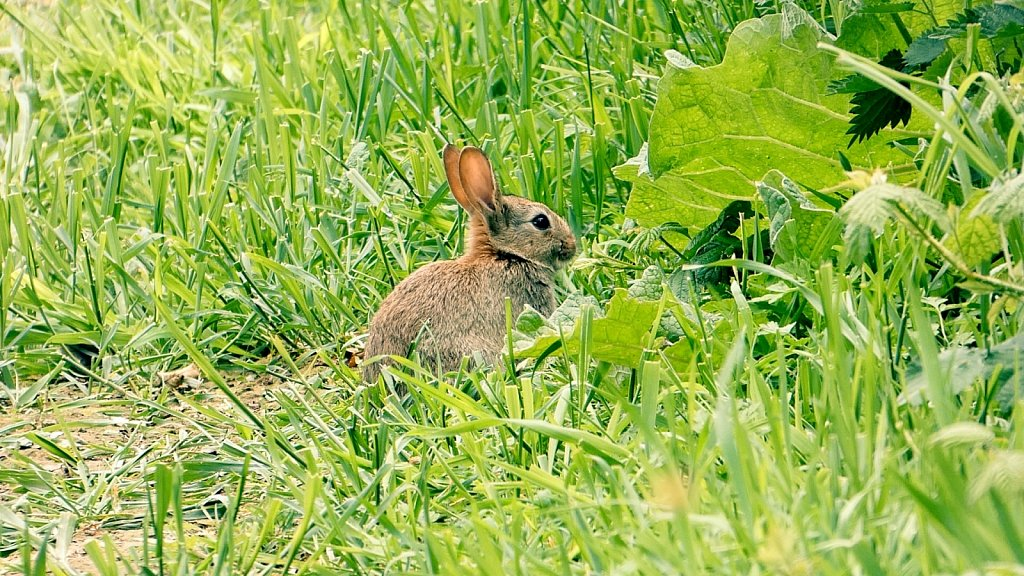 Bunny-Rabbit-Kirkham-Abbey.jpg
