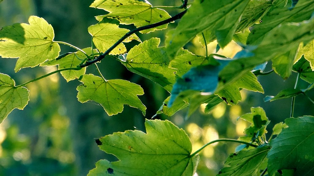 Glowing-Leaves-Thornton-le-Dale-to-Dalby-Forest.jpg