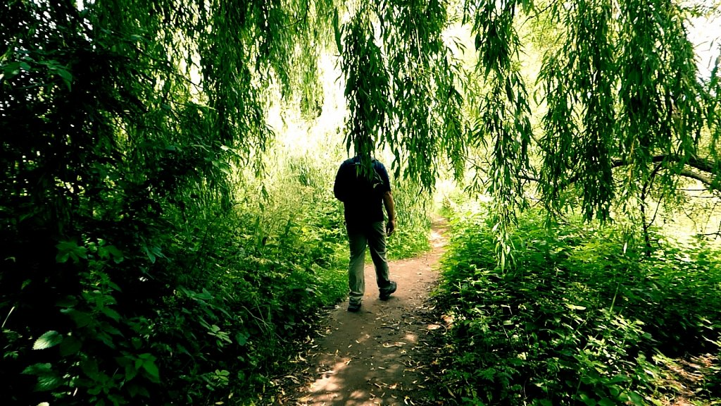 Shady-Willow-Tree-Path-York-River-Ouse-Walk.jpg